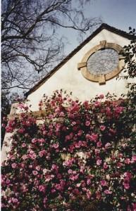 MFTMay13-Camellias Bodnant Gardens